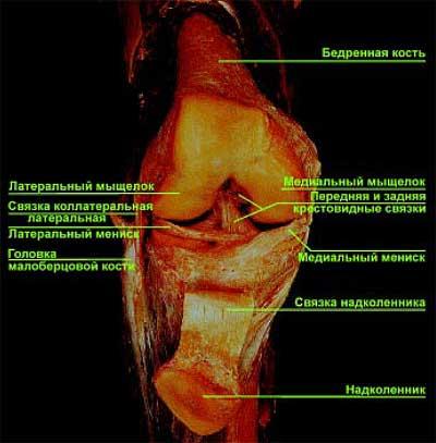 Травмы коленного сустава у бодибилдеров лечебная физкультура после эндопротезирования тазобедренного сустава