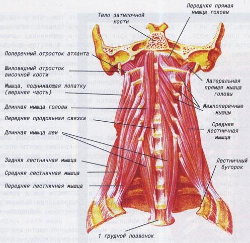 Лечение позвоночника грыжи позвоночника в уфе
